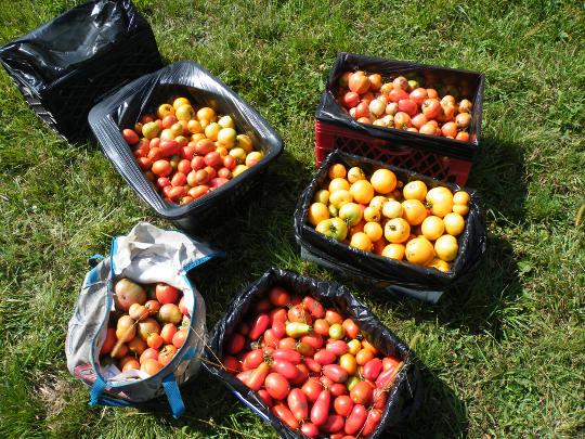 A Good Harvest