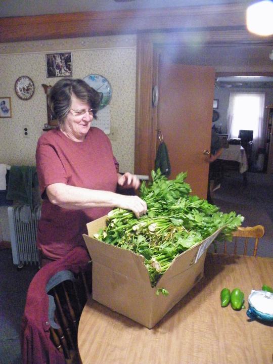 Celery after Harvest