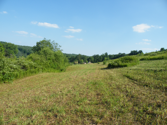 Big Field Around My Home