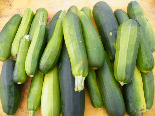 Zucchini, Various Colors and Flavors